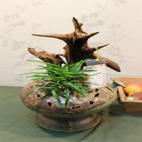 동양란괴목소엽풍란